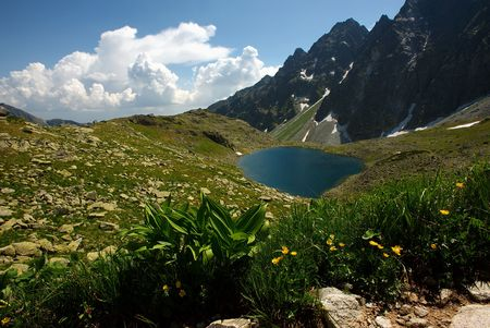 plateau of flowers: Small mountain lake on plateau with flowers in foreground in sunny day with clouds on horizon