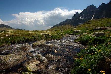 plateau of flowers: Drifting mountain creek on plateau in sunny summer day with some clouds and yellow flowers