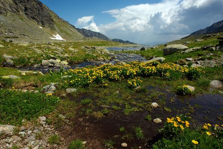 plateau of flowers: Mountain creek on plateau with yellow flowers in summer day with some clods