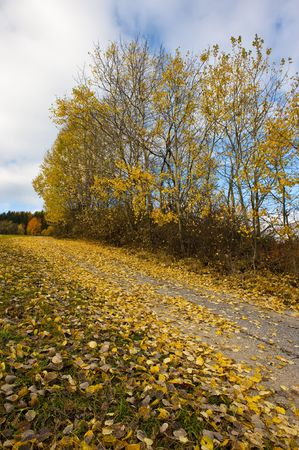 folio: Trees with yellow folio by the road in autumn country with blue, partly cloudy sky