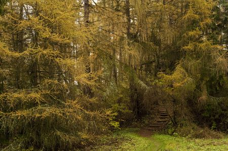 greeen: wet autumn forest with a brown walking path
