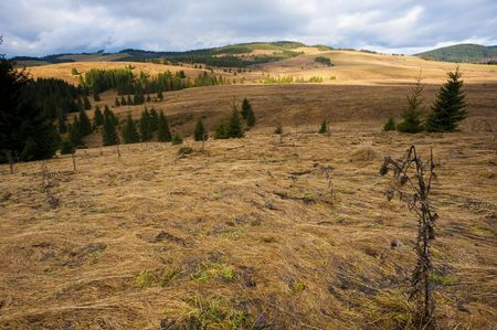 sapless: Late autumn meadows with sapless yellow gras