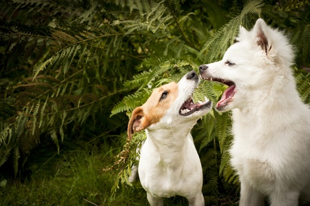 two happy dogs are playing together photo
