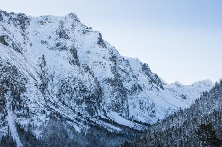 adn: bosque adn mountinas de nieve, paisajes de invierno