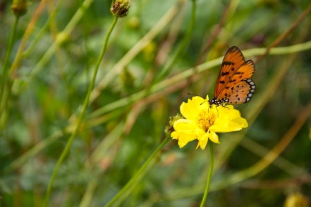 Butterfly om marigold photo