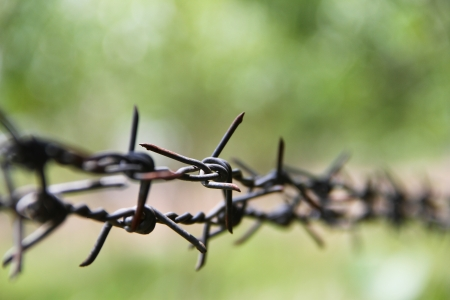 Barbed wire Standard-Bild