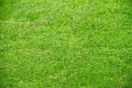 Fresh green natural moss background Stock Photo - 15112661