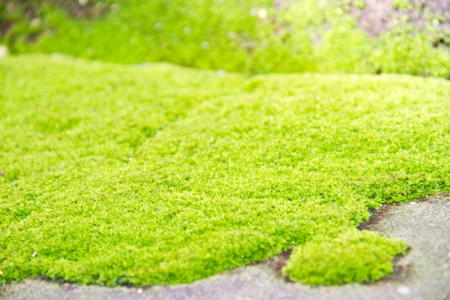 Fresh green natural moss background Stock Photo - 15236074