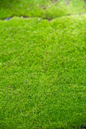 Fresh green natural moss background Stock Photo - 15112709