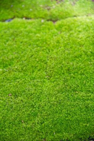 Fresh green natural moss background Stock Photo - 15112709