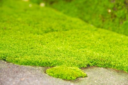 Fresh green natural moss background Stock Photo
