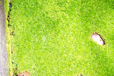 Fresh green natural moss background Stock Photo - 15236068
