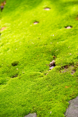 fresh green moss background Stock Photo - 15113070