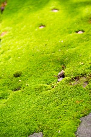 fresh green moss background Stock Photo - 15113070