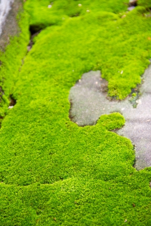 fresh green moss background photo