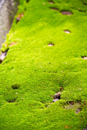 fresh green moss background Stock Photo - 15113093