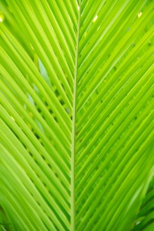 roo: Chrysalidocarpus lutescens Areca glaucescens palm trees jungle leaf