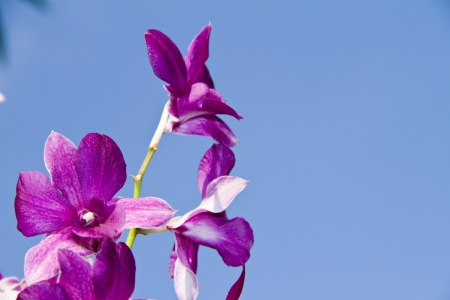 Orchid against blue sky  photo