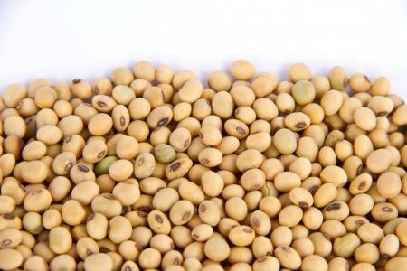 soy bean on white background photo