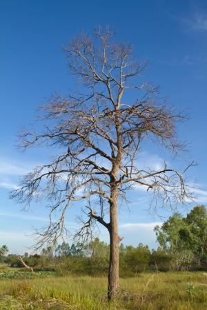 Tree of death dry Stock Photo - 16542914