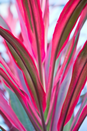 Cordyline sale del fondo photo