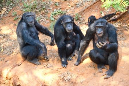 Family of gorillas photo