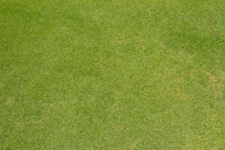grassy field: Beautiful green grass texture from golf course Stock Photo