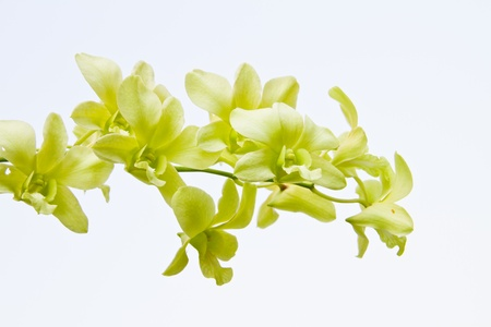Beautiful orchid in the garden   Stock Photo