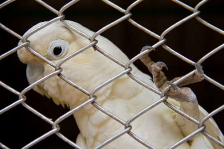 bipedal: White bird in a cage