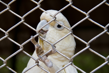 endothermic: White bird in a cage