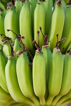 Young green banana on tree  photo