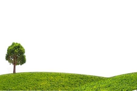 Irvingia malayana boom en groen gras op witte achtergrond, tropische boom in het noordoosten van Thailand op een witte achtergrond Stockfoto - 19798428