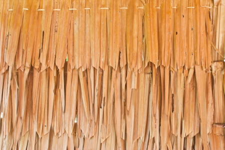 DRIED PALM TEXTURE