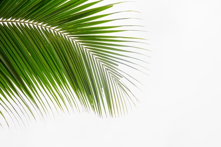 nervure: Abstract green leaves background