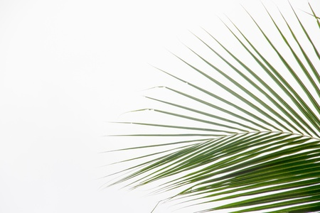 diagonale: Abstract green leaves background