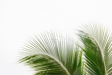 nervure: Extracto verde sale del fondo