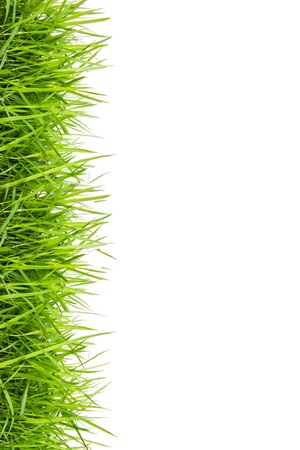 high up: green grass isolated on white background Stock Photo