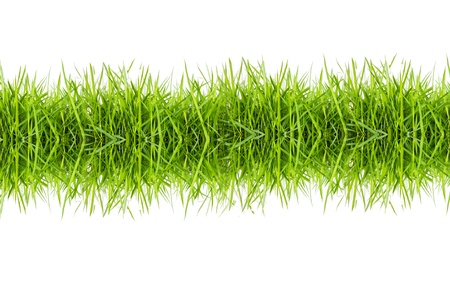 green grass isolated on white background photo