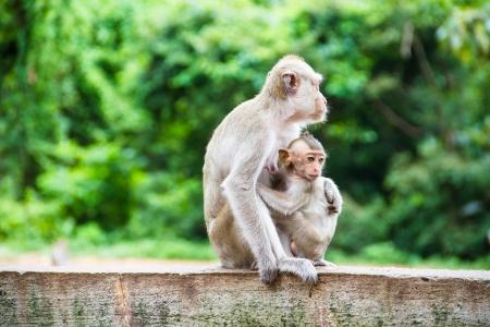 long jump: Monkey family
