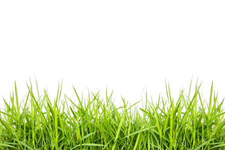 Green grass isolate on white background photo