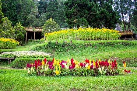 Mae Fah Luang Garden,locate on Doi Tung, Chiangrai Province, Thailand photo