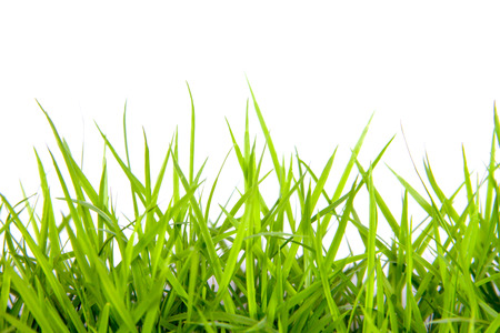 Green grass with white background photo