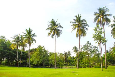 clound: Coconut tree with green grass garden