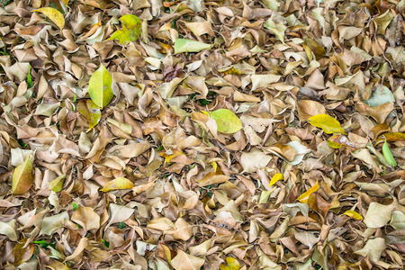 sear and yellow leaf: dry leaves background Stock Photo