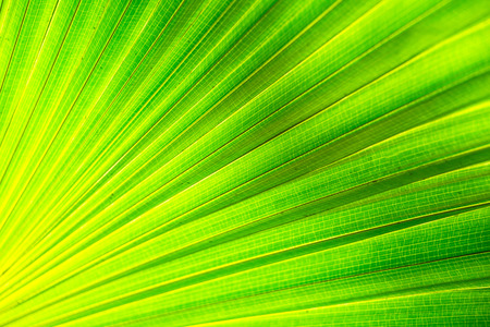 Green palm Leaf background Stock Photo