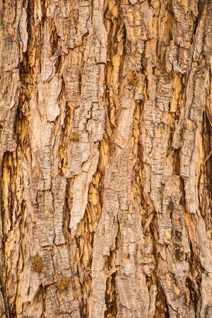 bark rain tree:   3636;Bark texture Stock Photo