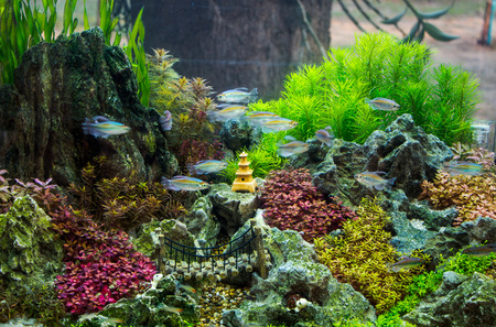 Beuatiful aquarium Stock Photo - 26853659