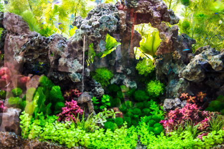 Beautiful aquarium Stock Photo - 26853911