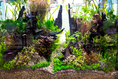 acquariofilia: Beautiful aquarium