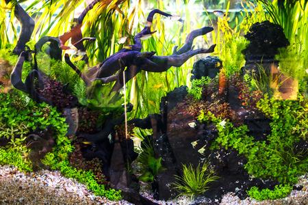 Beautiful aquarium Stock Photo - 26853919